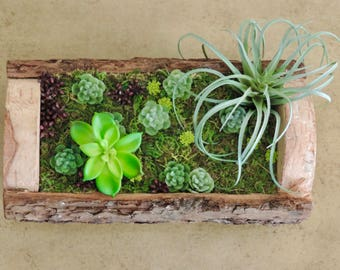 Artificial green succulent flower arrangement in tree bark planter with real preserved moss