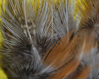 F17 - Lot/Set of feathers/plumes natural of pheasant brown/red/black/blue-7/9, 5cms X 20plumes/F17