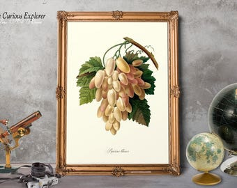 Botany Decor, Grape Fruit Wall Art, Grape Poster, Rustic Fruit Decor, Fruits Kitchen Decor, Kitchen Print, Print Gift for Woman - E11_10