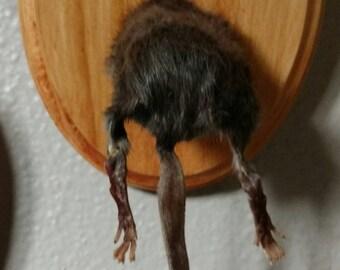 I Don't Give A Rats A**  taxidermy rat rump wall mount