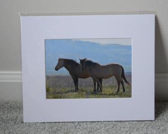 Dun Horses Print - White