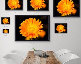 Bright Orange Gerber Daisy Fine Art Photography, Wanderlust FlowerPhotograph,  Orange Flower, Fine Art Print, Fine Art Photography