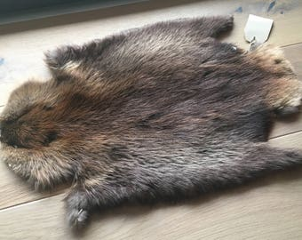 Beaver hide from Canada