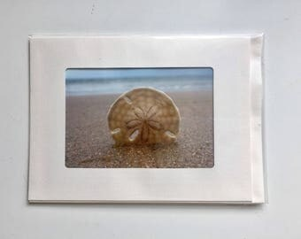 3 Sand Dollar photo cards