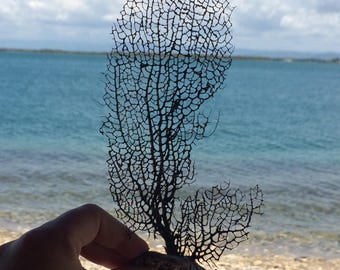 Sea Fan, Surf Tumbled, Natural Sea Fans, Sea Fan Coral, Caribbean Fans, Beach Decor, Beach Wedding, Coastal Decor, Coral Stem, Nautical, Fan