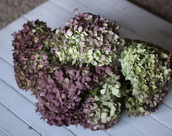 Dried Hydrangea macrophylla Stems (Group NY)- Dried Hydrangeas, Hydrangea macrophylla, Craft Hydrangeas, Wedding Hydrangeas