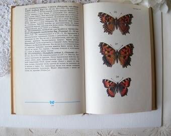 Butterfly vintage book Butterfly Entomology book Butterfly soviet book School atlas determinant of butterfly Moth illustrations Moth book