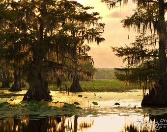 "Bayou Photo Print | ""Caddo Lake Morning"" | Caddo Lake Photo - Louisiana Swamp Print - Egret Swamp Wall Art - Texas Cypress Bayou Print"
