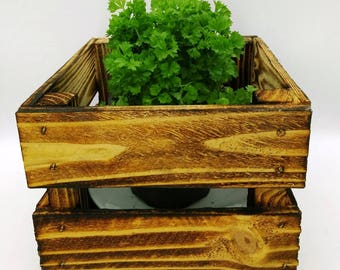 Parsley, herb pot, flower pot, kitchen herbs, spices, planting bowl, Easter, cutlery box, bottle box, Planztopf, storage box