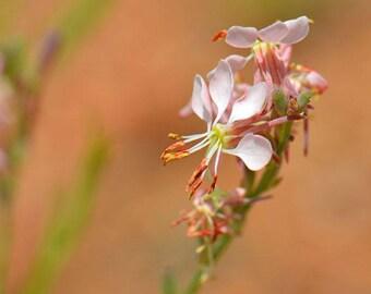 Scarlet Beeblossom Flower Essence/Vibrations/Flowers/Helaing