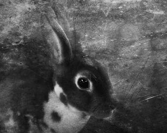 Rabbits, stock photo, dark wall decor, fine art photography, Farm animals, Black and white, Printable wall art, Alice in wonderland, A3 8x10