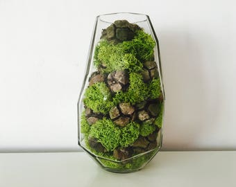 Terrarium, vase, foam stabilized, pinecone, autumn, reindeer Moss decoration