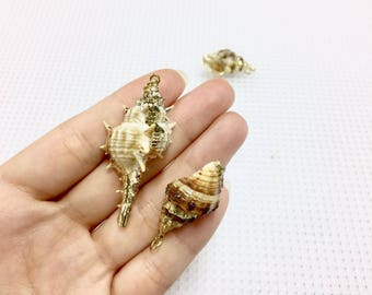 At choose 2kinds of shell_Conch/Murex trapa_Natural shell pendant with gold rim_Pack of 2 shells