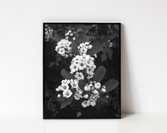 Photography Wall Art, Black and White Photography, Nature Photography, Flower Photography, Flowers, Blooms, Blooming, INSTANT DOWNLOAD