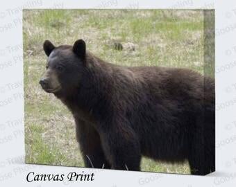 Black Bear Portrait Fine Art Photography, Canvas Gallery Wrap, Black Bear Fine Art Print, Wildlife Wall Decor, Gifts for Him, Home Decor,
