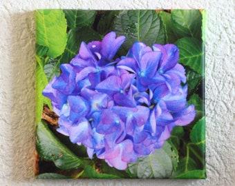 Floral Canvas Hydrangea