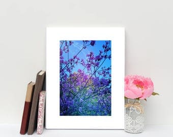 Shining Bright, Floral Photography, 6x8 matted print, wall art, matted photo, 6x4 print, Flower print, Flower Photo, Modern Art