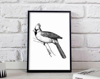 Northern cardinal Bird poster, Northern cardinal Bird wall art, Northern cardinal Bird wall decor, Northern cardinal Bird print