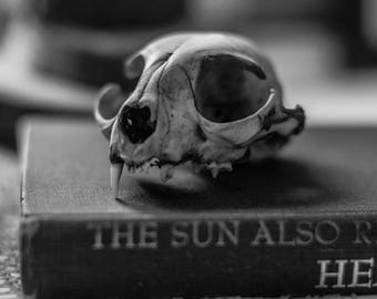 Cat Skull/Hemingway Print