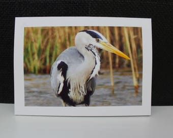 Any occasion photo card (blank) - Heron at the lake