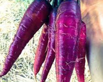 Purple Carrots,Heirloom,Seeds,Garden seeds,Vegetable Seeds,NonGMO,Garden,vegetable garden,Organic,natural,farmers market,beautiful purple,
