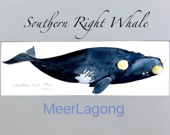 Art Picture Paint Watercolor Southern Right Whale