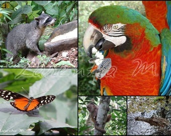 Photo 30X40cm jumble exotic animals from Costa Rica