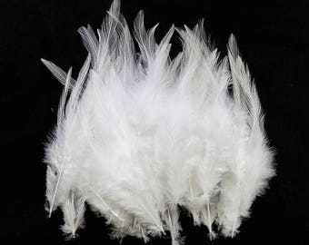 set of 10 white 10-15cm feathers
