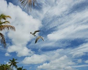 Gulls in Paradise