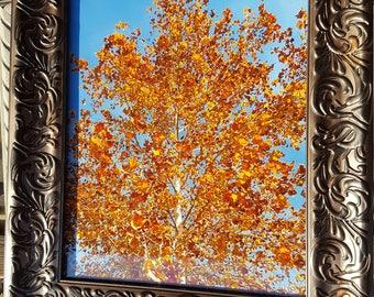 Beautiful Fall, Thanksgiving