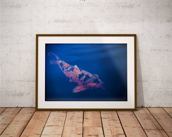 Metal Print - Big Fish, Photography - Metalic Aluminum Print, Fine Art, Wall Art, Nature Print, Home Decor, Photography