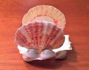 Small shell napkin holder