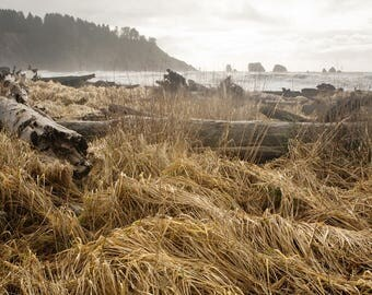 After The Storm, Beach Grass and Driftwood, La Push, Fine Art Photography, Nature Photography, Northwest, Seascape, Landscape, Wall Art