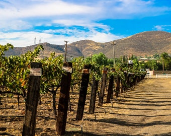 Agua Dulce Winery Sunny Vineyard Rows