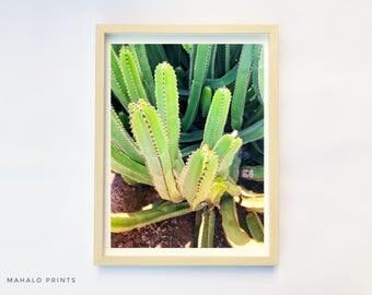 Cactus, Plant Print, Cactus Print