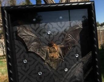 Lesser Bamboo Bat