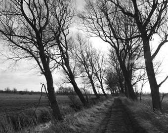 Trees on Beccles Marshes