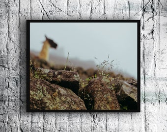 Nature Photography, Machu Picchu Photo, Rain on Grass with Alpaca, Digital Download, Printable WallArt, Home Decor, Wall Decor, Travel Decor