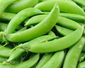 Snap Peas - 200+ Seeds - Sugar Pod Pea - 120 Grams