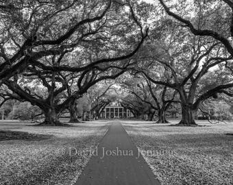 Oak Alley Plantation - St. James Parish - Louisiana - Fine Art Photography Print - Black and White - Landscape - Live Oak - Old South