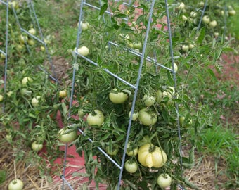 Tomato cage, collapsable greenhouse,