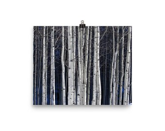 Aspen Grove in Winter - Printed Wall Art Photography, ready to be framed.
