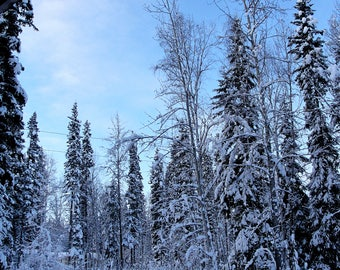 Snow Covered Trees Against Blue Sky | Digital Download