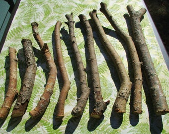 Willow Wand Wood Sticks, Willow Carving Wood, Salix Alba Tree of Witcheries, Woodworking Supply, Sacred Woods, Magical Tool Carving Willow