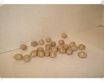 Mini Beige/Brown Plastic Eggs/ 2 Dozen/ Craft Supples*