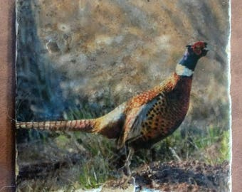 Ring-necked Pheasant Coasters - Hunting Decor Pheasant Coasters - Pheasant Bird Coasters - Ready to Ship