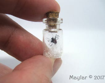 Spider Web Bottle - FREE SHIPPING