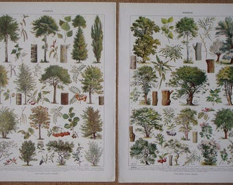 PAIR of Vintage FRENCH Book Prints TREES 'Arbres' 1928 illustrating types of trees
