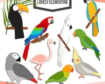 Tropical birds clip art, parrot clipart,  bird vectors - commercial use Instant Download