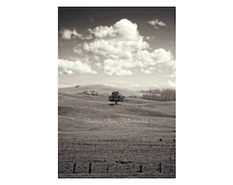 Tree Photography. Landscape. Nature photography. Black and White Nature Photography. Lone Oak Tree in Field. Hills. Petaluma